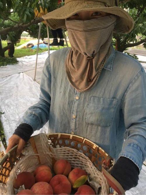 桃の収穫デビュー