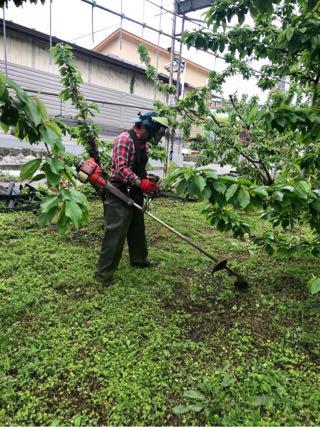 20190527農作業日誌。桃のおろ抜き、サクランボのおろ抜き、そして桃のおろ抜き。
